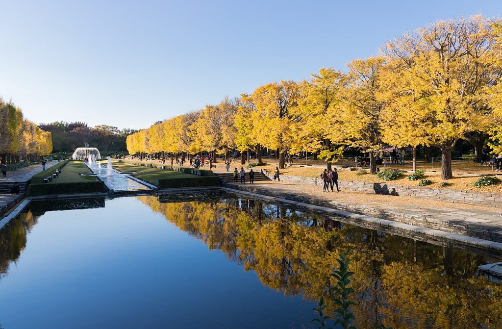 Best Autumn Leaves Spots in Tokyo #10 - Showa Memorial Park (aka Showa Kinen Park) 2