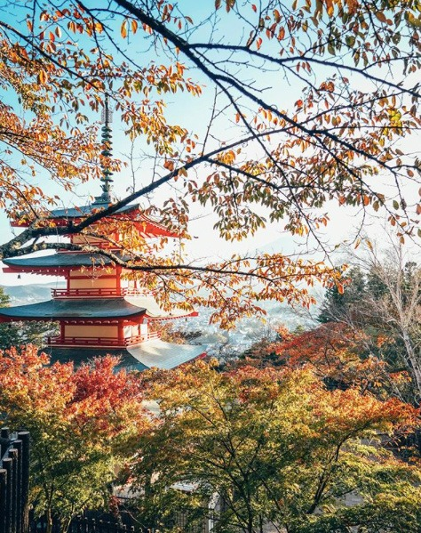 Chureito Pagoda Mount Fuji Japan in Autumn Koyo Momiji 1