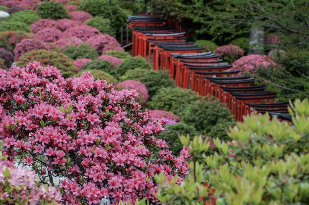 Yanesen Tokyo - Torii of Otome Inari at Nezu Shrine 5