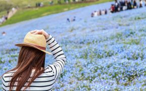 Hitachi Seaside Park Nemophila 3
