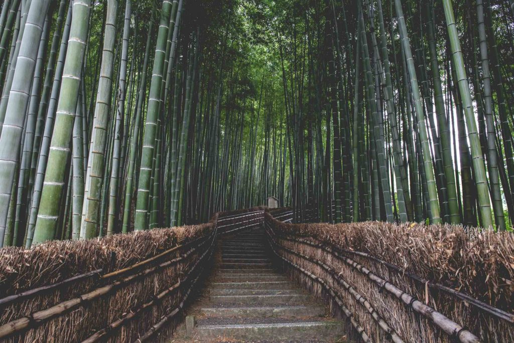 The 10 Most Instagrammable Places in Kyoto - Arashiyama Bamboo Forest