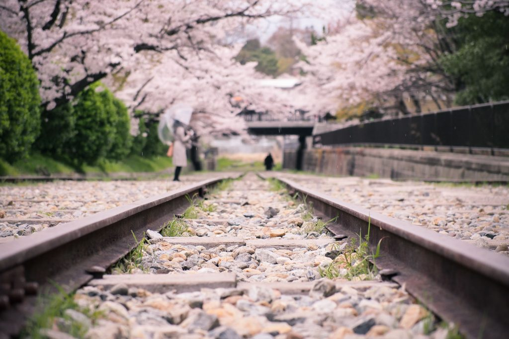 Best Cherry Blossom (Sakura) Spots in Kyoto - Keage Incline