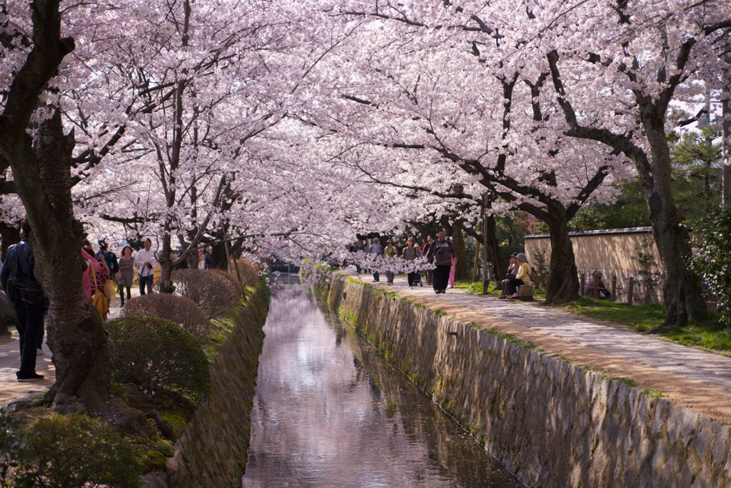 Best Cherry Blossom (Sakura) Spots in Kyoto - Philosopher's Path