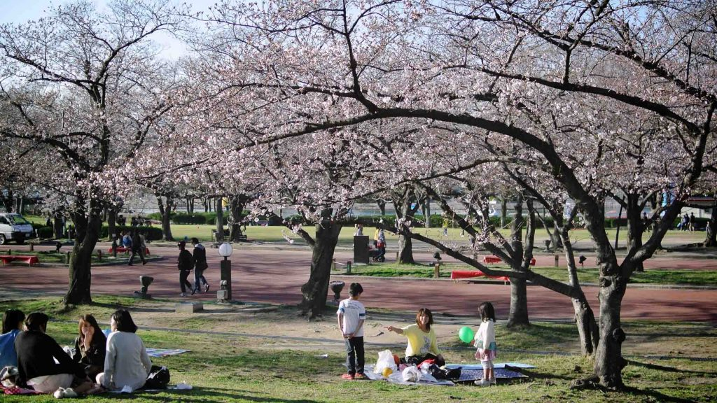 Sakura Osaka - Best Cherry Blossom Spots: Expo 70 Commemorative Park